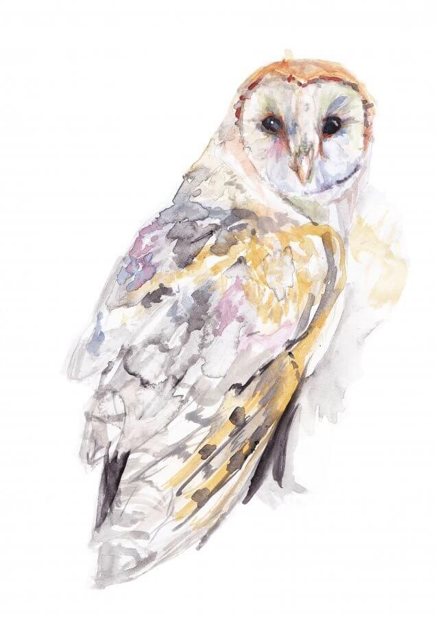 Barn Owl Colour (Main image)