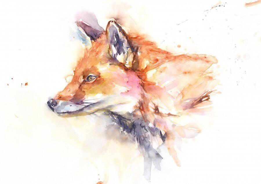 Fox Stare (Main image)