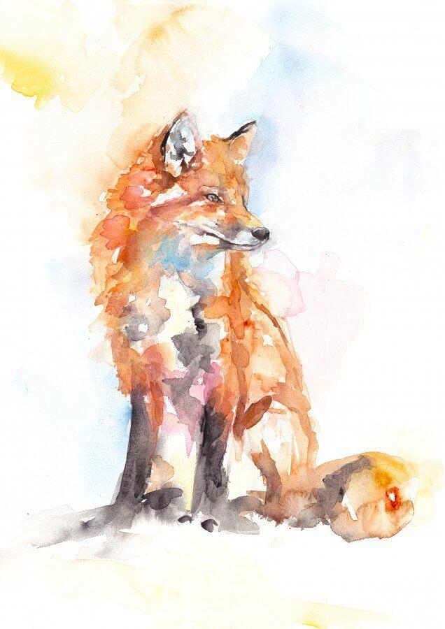 Handsome Fox (Main image)