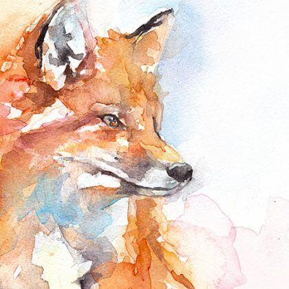 Handsome fox (close up)