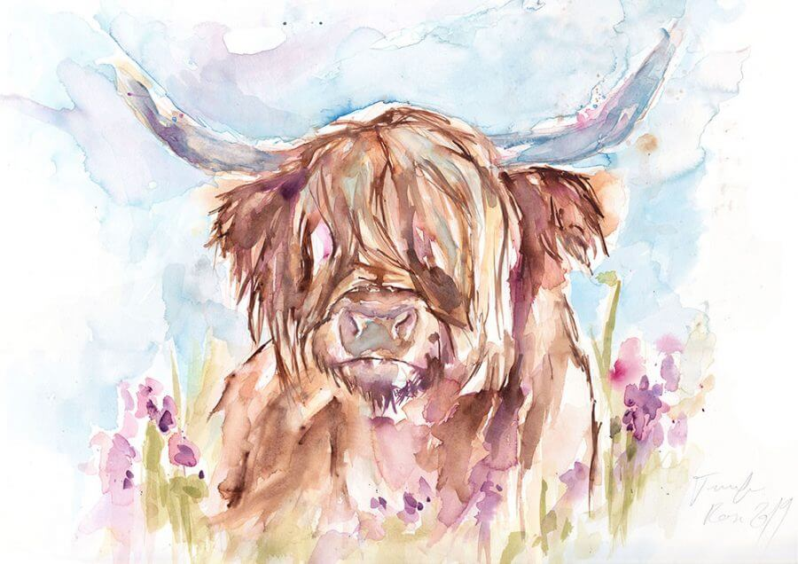 Highland Cow (Main Image)