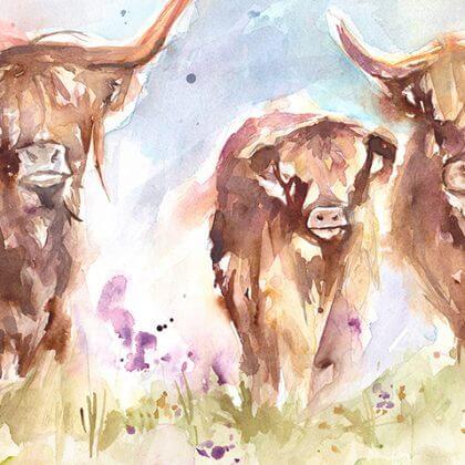 Highland Herd (close up) (1)