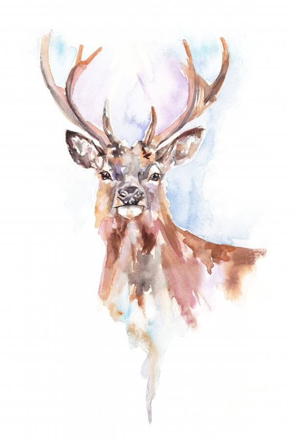 Winter Stag Face view (Main image)