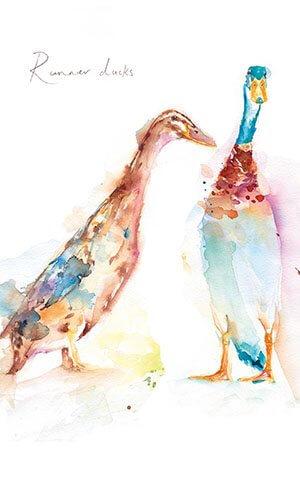 Two Runner Ducks