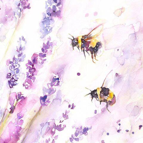 BeesAndLavenderFAQ